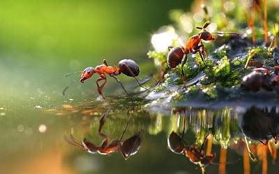 نمل-التخلص من النمل