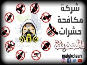 شركة مكافحة حشرات بالمدينة المنورة-مالك كلين